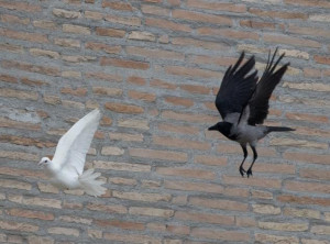 The doves were released during Pope Francis' noon Angelus prayer.