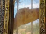 The Veil of Manoppello.